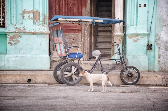Dog and bicycle taxi, Havana